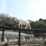 このアングルからヤギを見たのは初めて。 (Instagram)