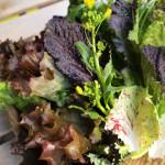 鎌倉市場で菜の花入りのサラダ野菜