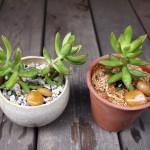 『sol × sol』で多肉植物の植え替え